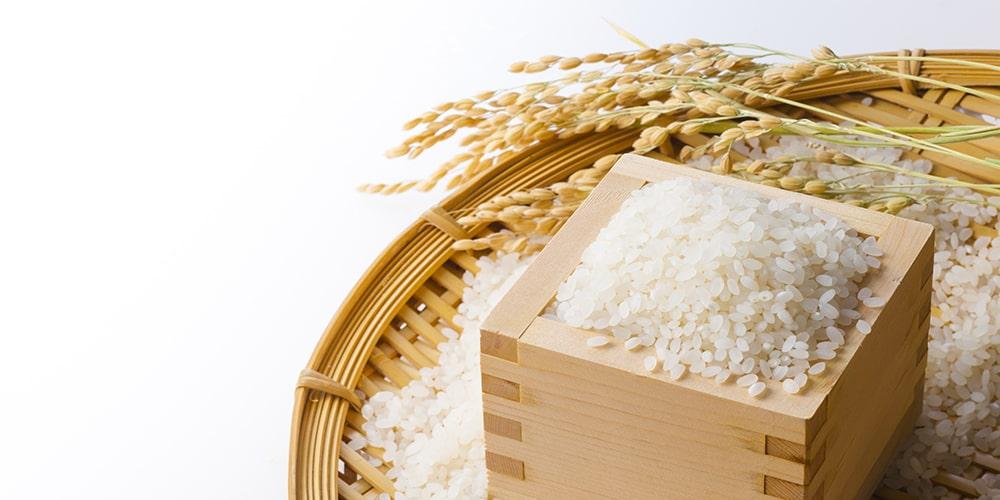 日本とお米の物語